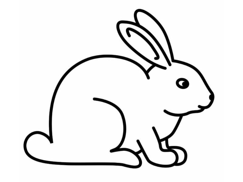 coelhos para colorir