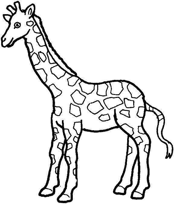 girafas para colorir